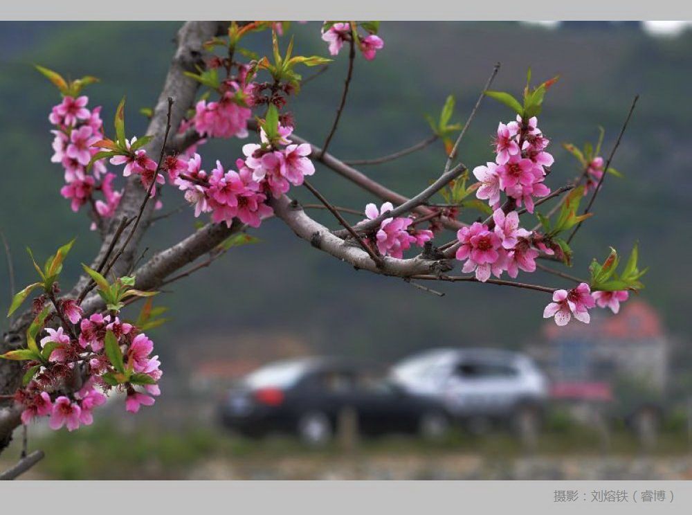 朋友去辽宁省丹东市宽甸县河口美丽迷人的桃花岛采风