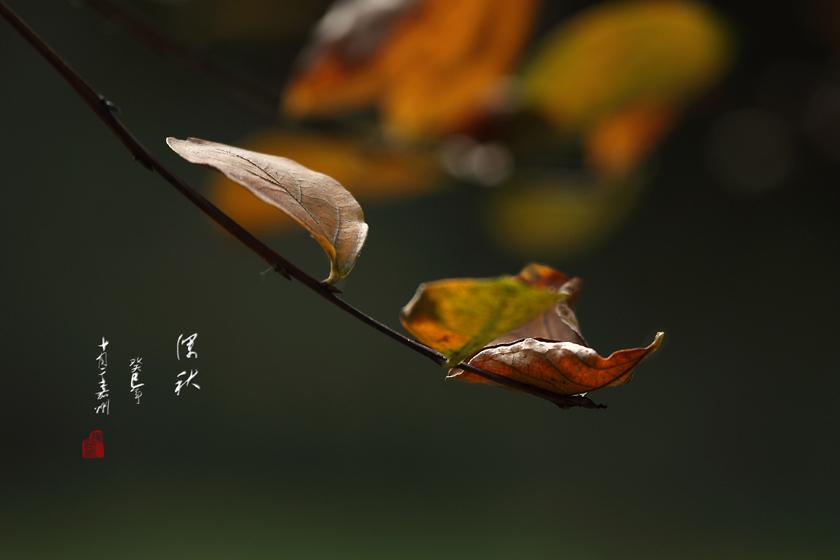 深秋景象的动物