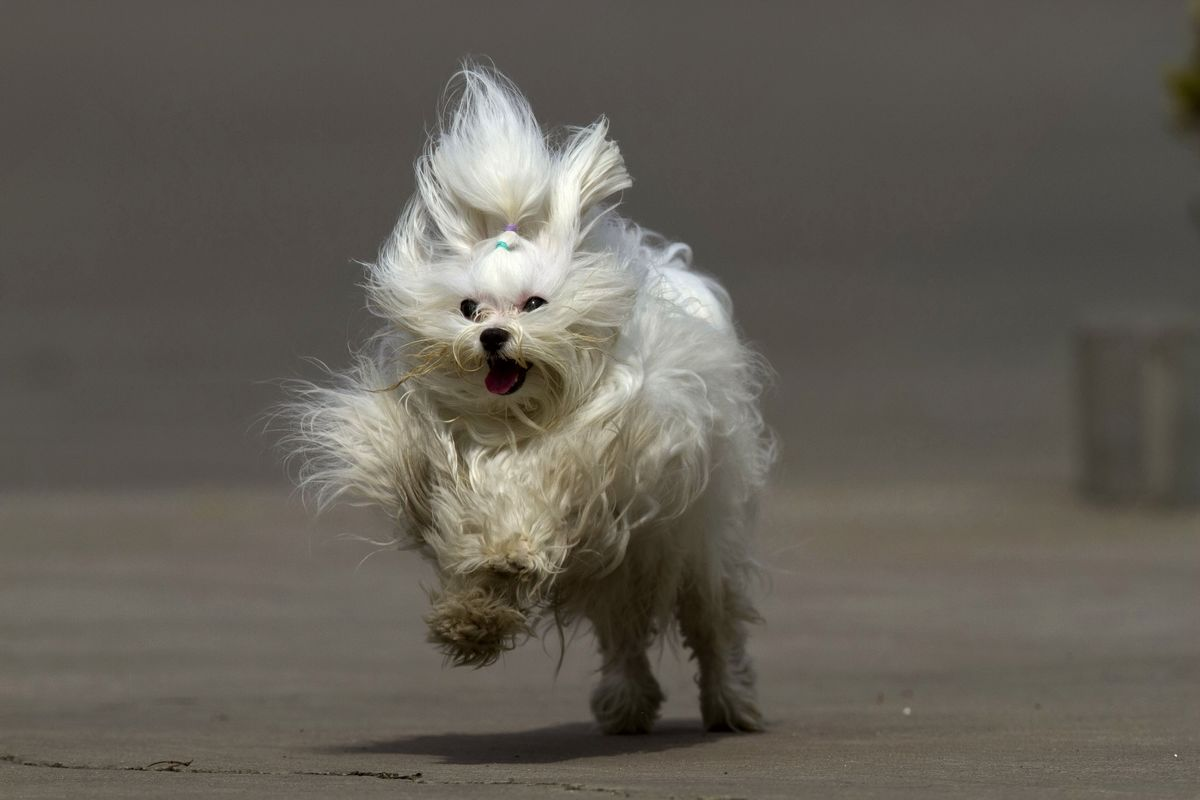 模仿动物奔跑法