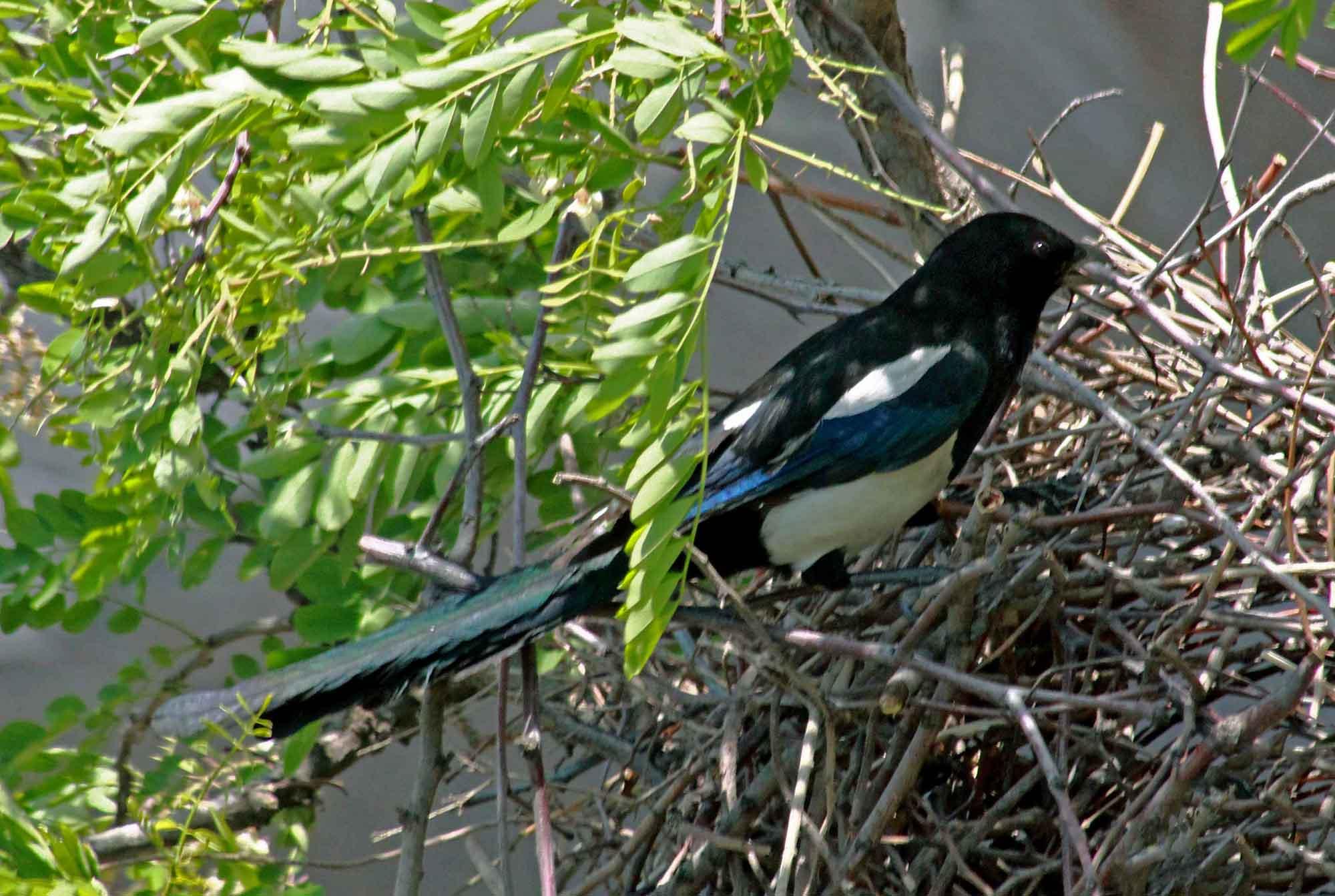 善于筑巢的动物
